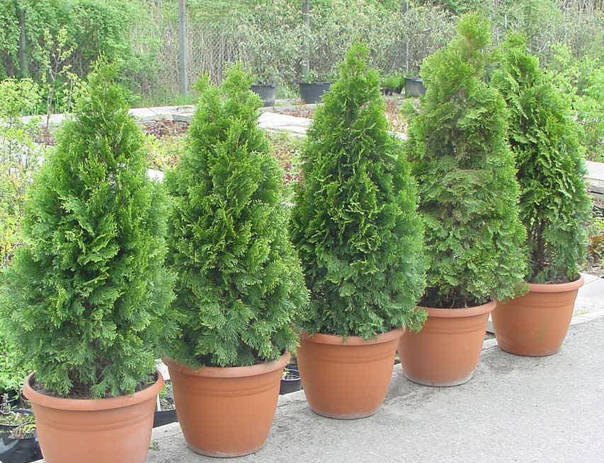Növénykölcsönzés