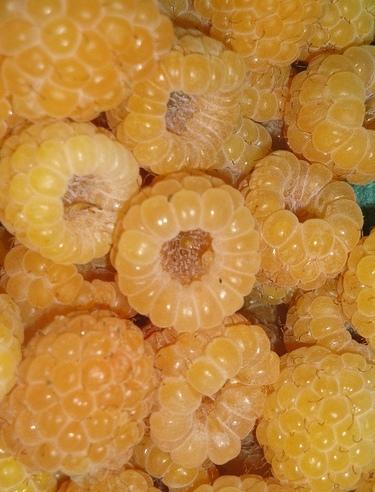 Fertődi narancs málna
