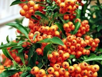 Oszi-vitaminkura-homoktovissel