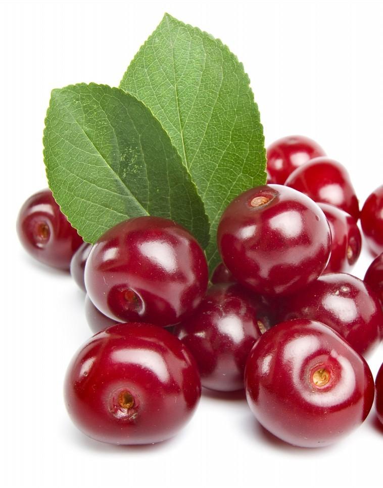 Paulus cseresznye