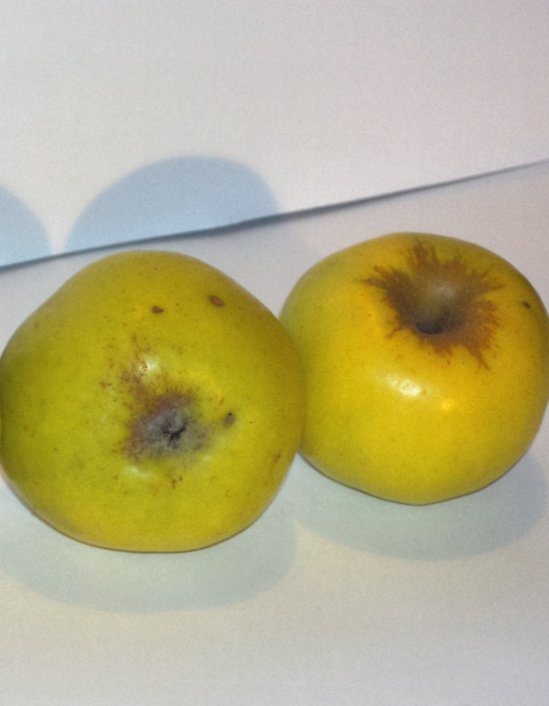 Pónyik alma