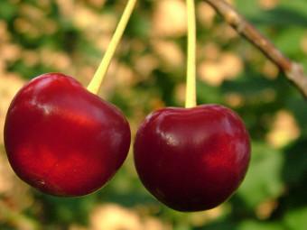 Anita cseresznye
