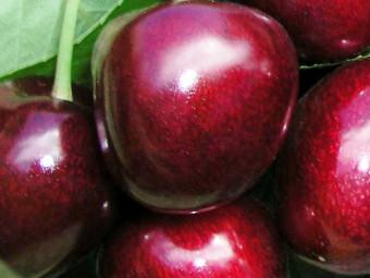 Carmen cseresznye