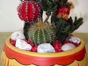 kaktusz változatok