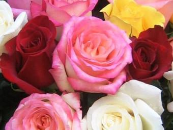 Rózsa mini változat