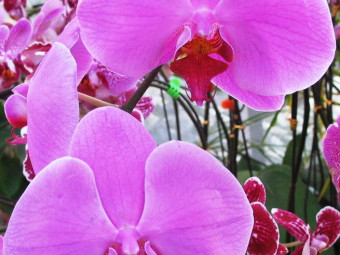 Orchidea változatok