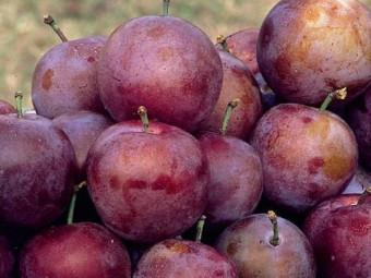 Violette szilva