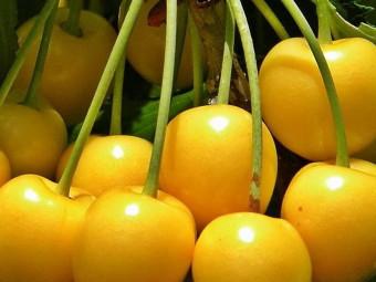 Sárga cseresznye