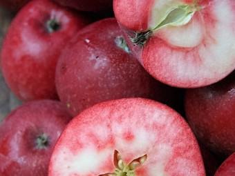 Vörösbelű alma